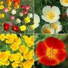 Guarantee 500 Seeds SEED CALIFORNIA DREAMING CALIFORNIA POPPY FLOWER MIX 4 Species Wildflower