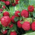 Guarantee Indian Strawberry Duchesnea Indica 100 Seeds