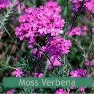 Guarantee Moss Verbena Purple 200 Seeds