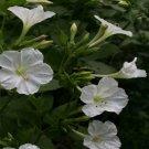 Guarantee Four O'Clock  White 50 Seeds