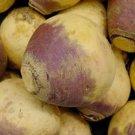 Guarantee Rutabaga Purple Top 200 Seeds