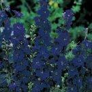 Guarantee Delphinium / Larkspur Blue Spire  50 Seeds