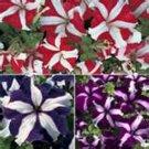 Guarantee Petunia Star Mix 100 Seeds