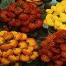 Guarantee Slipper Flower Fascination Mix 50 Seeds