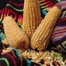 Guarantee corn POPCORN WHITE pop corn 75 SEEDS