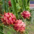 Guarantee 30 Seeds Red Dragon Fruit Pitaya Seeds HEIRLOOM NONGMO