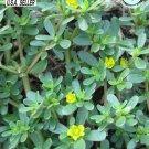 Guarantee 1000 Seeds Seeds Heirloom Herb Portulaca oleracea GREEN PURSLANE Culinary Medicinal