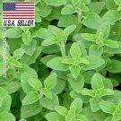 Guarantee Italian OREGANO  2000 Seeds HEIRLOOM HEALTHY N TASTY HERB