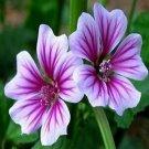 Guarantee Hollyhock Zebrina Flower Seeds Malva Sylvestris 50 Seeds