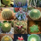 Guarantee RARE ECHINOCACTUS MIX variety exotic barrel cactus flowering cacti seed 15 SEEDS
