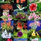 Guarantee RARE SINNINGIA MIX rare african violets fragrant garden flowers seed 20 seeds