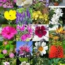 Guarantee FLOWERING GARDEN PLANTS MIX rare flower blooming fragrant backyard seed 15 seeds