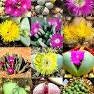 Guarantee COLOR ARGYRODERMA MIX succulent cactus mixed living stones rocks seed 50 SEEDS