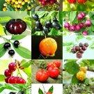 Guarantee CHERRIES MIX rare wild CHERRY exotic edible fruit jam jelly sweet seed 50 seeds