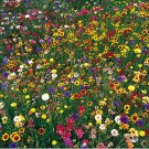 Guarantee wildflower mix 100% seed 1/4 POUND LB. SEEDS