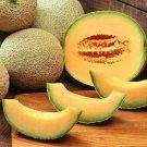 Guarantee Cantaloupe melon dulce sweet exotic fruit seed 100 SEEDS