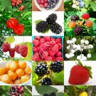 Guarantee BERRIES MIX rare wild BERRY exotic edible fruit jam jelly sweet seed 100 seeds