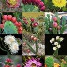 Guarantee FLORIDA CACTUS MIX rare cacti exotic flowering desert succulent seed  50 seeds