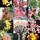 Guarantee FLOWERING ECHEVERIA mix rare exotic succulent HEN & CHICKS flower seed 100 seeds