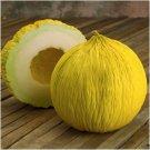 Guarantee 200 Organic Golden Beauty Casaba Melon seeds   Non GMO Harvested n
