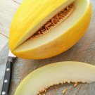 Guarantee 200 Organic Yellow Canary Melon Seeds   Non GMO Harvested in