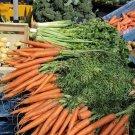 Premium 1500 Seeds TENDERSWEET CARROT Orange Red Daucus Carota Vegetable Seeds