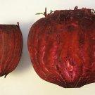 Premium 250 Seeds DETROIT DARK BEET Heirloom Beta Vulgaris Vegetable Seeds