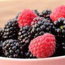 Premium 50 Seeds BLACK RASPBERRY Bush Fruit Seeds