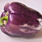 Premium 75 Seeds PURPLE BEAUTY Sweet Bell Capsicaum Annuum Mild Vegetable Seeds