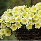 Eddy-Endah Store 100 pcs Petunia Bonsai Four Seasons Can Be Planted Perennial Flowers Planting Indoo