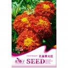 Eddy-Endah Store Fire Red French Marigold Annual Flowers Seeds, 50 Seeds, Original Pack, Light Fragr