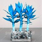 Eddy-Endah Store Rare 50 pcs Blue Lucky Bamboo Bonsai Anti Radiation Absorb dust Tree Plants Indoor