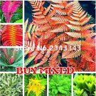 Eddy-Endah Store 100pcs Garden Fern Seeds Rare Creeper Vines Grass Seed Mixed Rainbow Foliage Plants