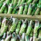 Eddy-Endah Store   Wasabi Seeds, Approx 400 Seeds / Pack, Original Pack, Japanese Mustard Herbs