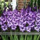 Eddy-Endah Store Heirloom New Gladiolus Perennial Flower Seeds, Professional Pack, 50 Seeds / Pack,