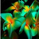 Eddy-Endah Store 100Pcs/Pack Plumeria Seeds Hawaiian Frangipani Flower Garden Wedding Party Decorati