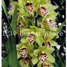 Eddy-Endah Store 100 pcs Rare Cymbidium Orchid Plant African Cymbidiums Flores,Phalaenopsis Bonsai F