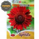 Eddy-Endah Store Hongyun' Dark Red Sunflower Seeds 5 Original Packs 15 Seeds/Pack 50 Pack
