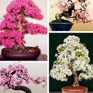 Eddy-Endah Store 10PCS Mixed Japanese Sakura Flores Seeds Bonsai Cherry Blossoms