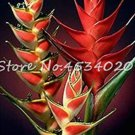 Eddy-Endah Store 100 Pcs Heliconia Plant Bonsai,Perennial Flower Plants, Semillas de Plantas Raras,