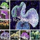 Eddy-Endah Store Euphorbia Lactea Seed 100Pc Perennial Succulent Its Shape is Peculiar and Beautiful