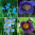Eddy-Endah Store   Mixed 4 Types Corn Poppy Blue Sky Blue Purple Perennial Flowers Bonsai 100 Seeds