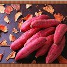Eddy-Endah Store Leguminosae sweet potato seeds,100pcs/bag