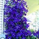 Eddy-Endah Store 100pcs/bag Blue Clematis Seeds T2