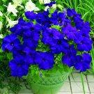 Eddy-Endah Store 100 Seeds/pack, Rare Sky Blue Petunia Seeds Bonsai Flower Annual Morning Glory Pott