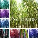 Eddy-Endah Store 50 Pcs Rare Black Timor Bamboo Bonsai, Bambusa Purple Colorful Bamboo Garden Plante