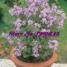 Eddy-Endah Store 20pcs Dwarf Lilac,Syringa meyeri Potted Flower Bonsai