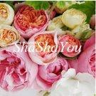 Eddy-Endah Store 100 Pcs Rare Ranunculus Asiaticus Seed DIY Plants Easy to Grow Flower Garden Plants