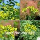 Eddy-Endah Store 10pcs/lot Rue Lithuanian Flowers,can Drive Flies, Vanilla Flowers,Courtyard Balcony