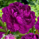 Eddy-Endah Store Chinese Rare and Precious Species of Blue Peony Flower Bonsai 10 Pcs/lot T2